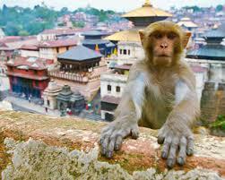 Development studies of Nepal